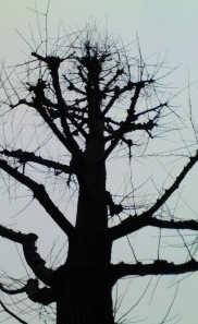 Woodsilhouette