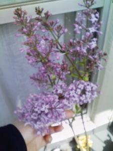 Lilac46