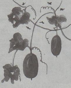 Asahi101009