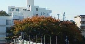 Kouyosakura
