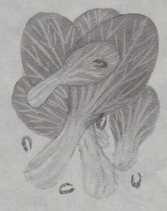 Asahi11