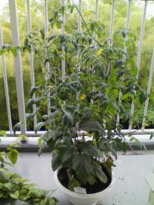 Planter1265