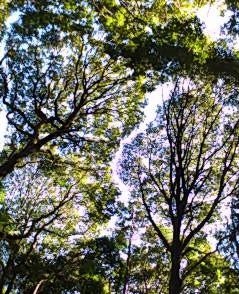 Woods1320