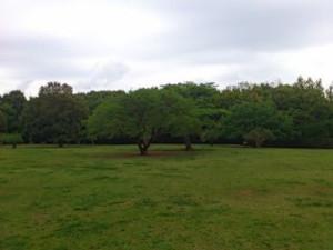 Sibafpark13_2