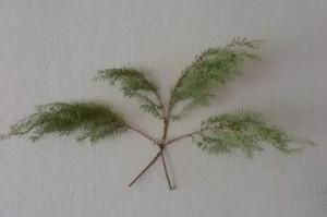 Giantmetasequoia_2