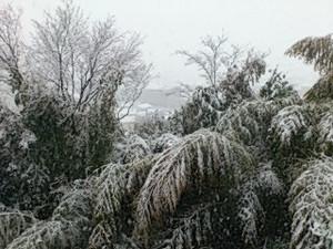 Snowbam1