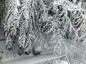 Snowbam3