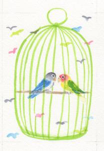 Asa_love_bird