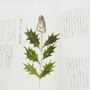 Djiwasihii_2