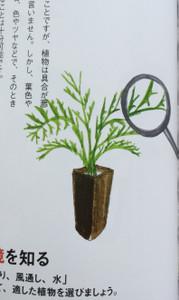 Greeninteria4