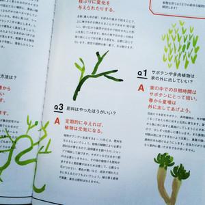 Greeninteria5